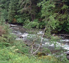 Ketchikan Creek 1