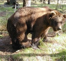 013004 Kodiak Female 122