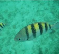 Cancun 2005 (26)