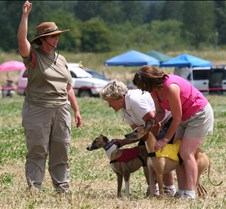 Whippets_8July_Run2_Course8_5118