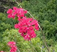 Flowers at Opaeka'a Falls