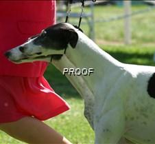 Fleetfield_Greyhound)Brace_3165