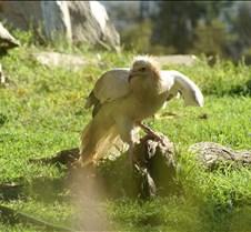 Wild Animal Park 03-09 316