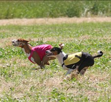 Basenjis_8Jul_Run1_Course2_0405CCR2