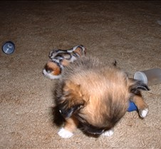 Puppy Picts 016