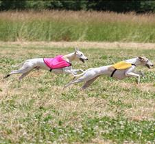 Whippets_8July_Run2_Course7_5104CR
