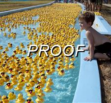 082513_ducks_02