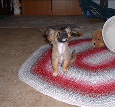 puppy picts 9-21-03 057