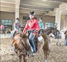 4H state horse Haley Shea