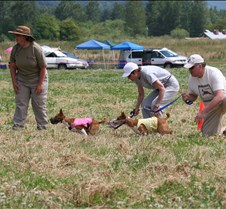 Basenjis_8Jul_Run2_Course1_5144