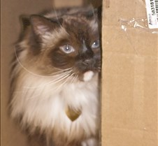 Lucy+in+Box