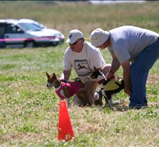 Basenjis_8Jul_Run1_Course2_0396