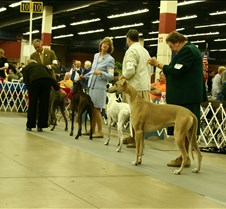 Open_Dog_Class_Sat27_March_0577CC