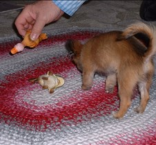 puppy picts 9-21-03 014