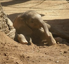 Wild Animal Park 03-09 080