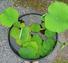 Plants in a Bucket
