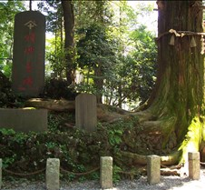 One of the oldest trees on Takao