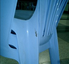 043 baby gecko