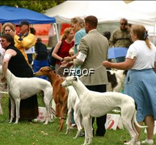 Winners_BredBY_Dogs_3762