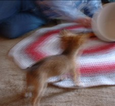 puppy picts 9-21-03 026