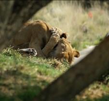 Wild Animal Park 03-09 162