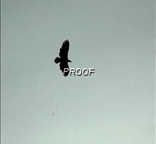 eagleflight-21