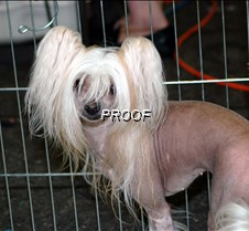 caged Mexican Hairless 3