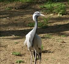 Wild Animal Park 03-09 306