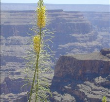 Grand Canyon, West rim at Guano point