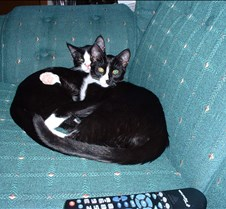 Kitty Picts February 2003