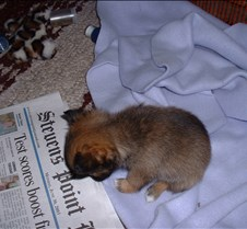 Puppy Picts 004