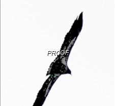 eagleflight-24