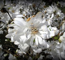 white flower in sun