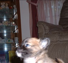 Puppy Picts 044