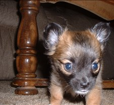 Puppy Picts 042