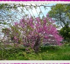 pinktreeframeb