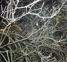 a real spider web (ted ofcourse)