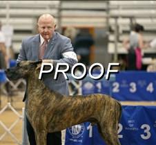 061713-dogshow-05