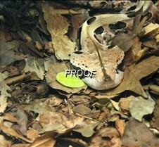hidden snake