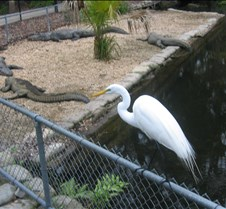 Homosassa Wildlife Park
