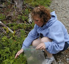 Kathy picking blueberries