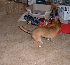 puppy picts 9-21-03 003