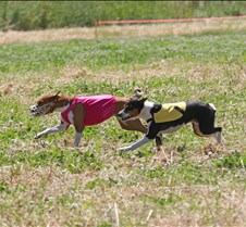 Basenjis_8Jul_Run1_Course2_0402CCR2