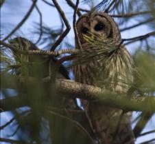 Owl 007