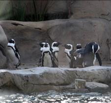 J Zoo 0611_153