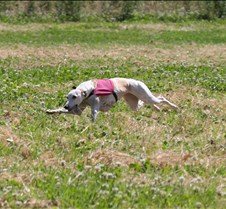 Whippets_8July_Run1_Course7_0303CR