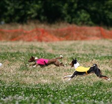 Basenji_7_July_Run1_Course3_3717CR