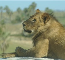Wild Animal Park 03-09 216