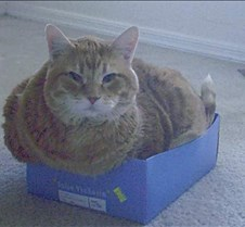 The fatter the cat the smaller the box