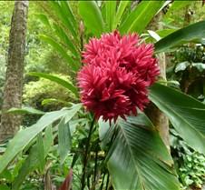 Hawaii 2010 037